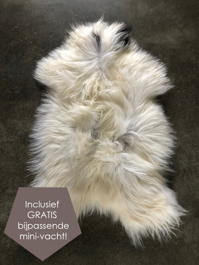 IJslandse wit grijze schapenvacht